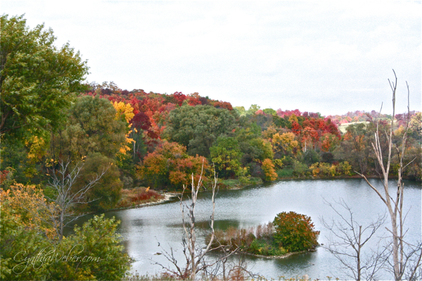 fall colours over the lake