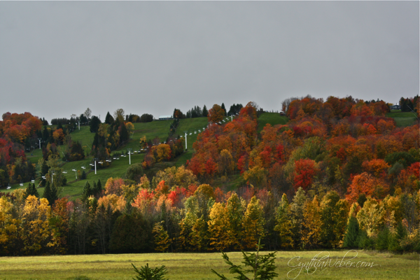 fall colours in the beautiful Beaver Valley region of Ontario by Cynthia Weber