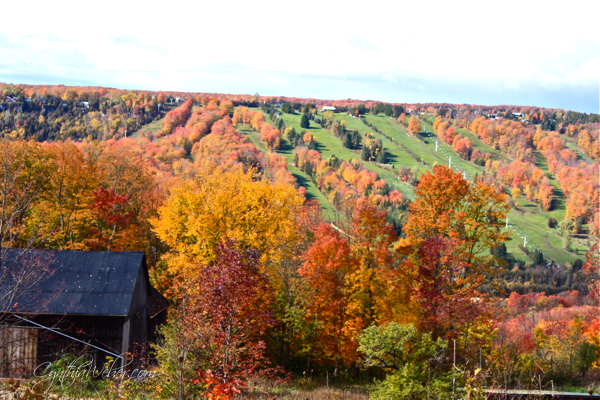 fall colours in the Beaver Valley