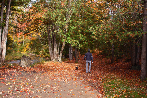 fall walking trail with man and dog