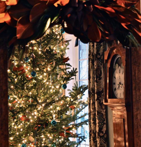 tree in mirror at hoop top house