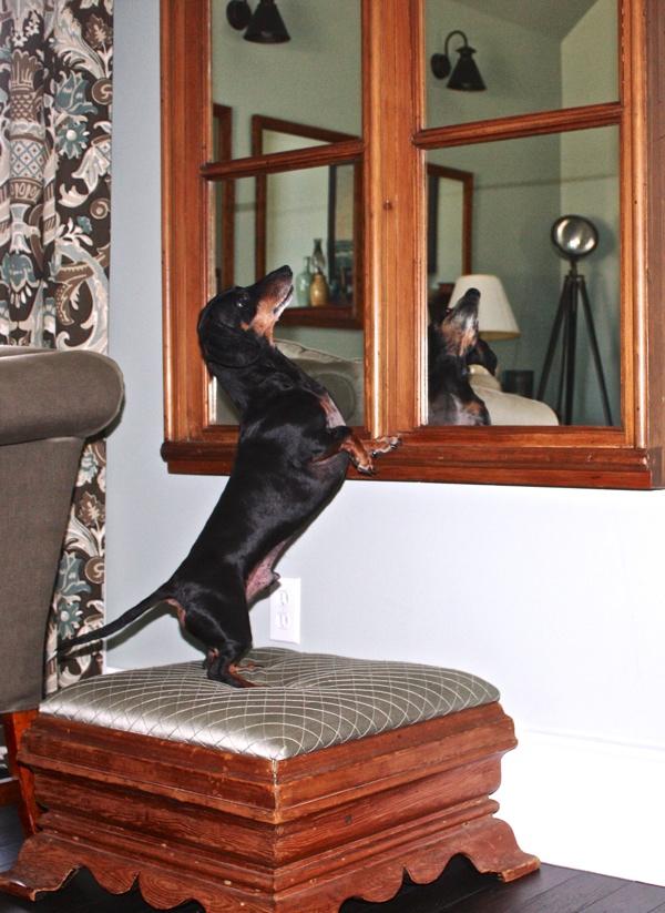 Emmitt looking in mirror cynthiaweber.com