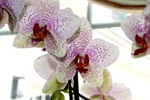 orchid close up 2 cynthiaweber.com