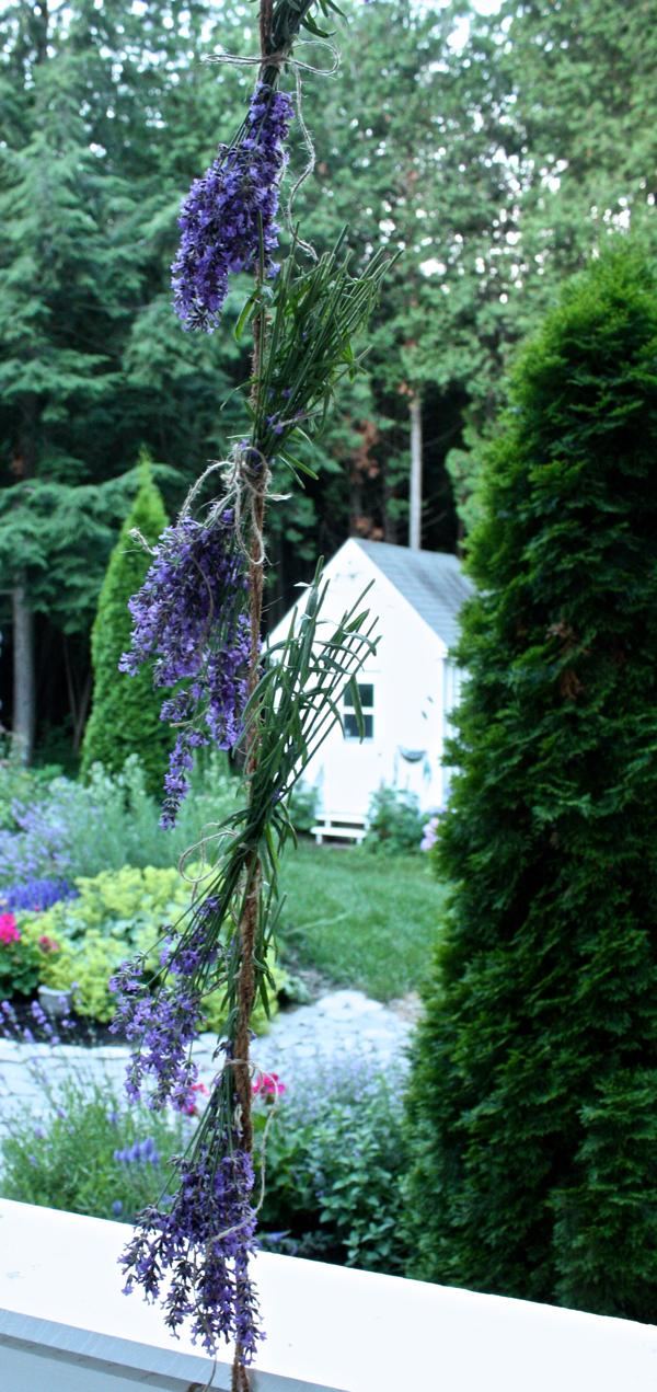 harvesting lavener at Hoop Top House cynthiaweber.com
