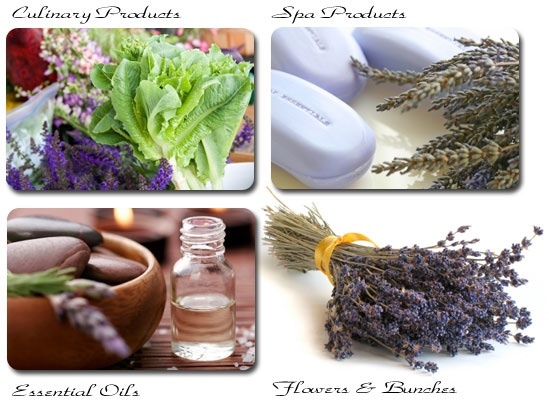 products from sacred mountain lavender B.C. Canada cynthiaweber.com