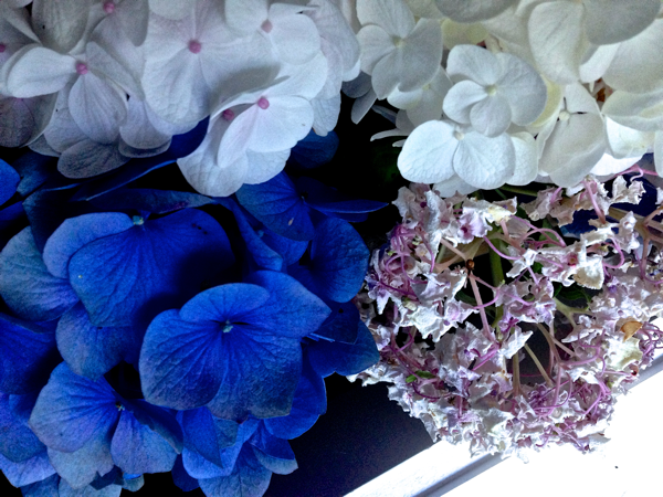Note to self… Hydrangea must have water...