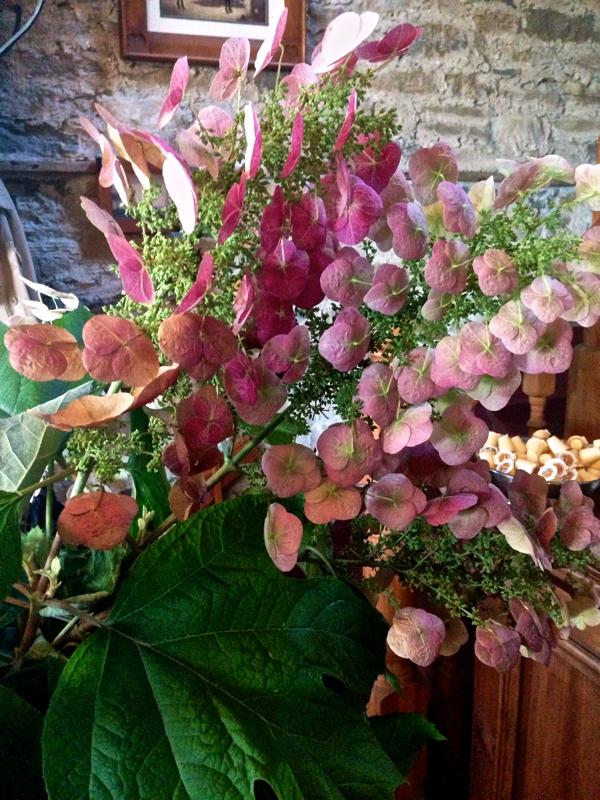 Oak Leaf Hydrangea CynthiaWeber.com