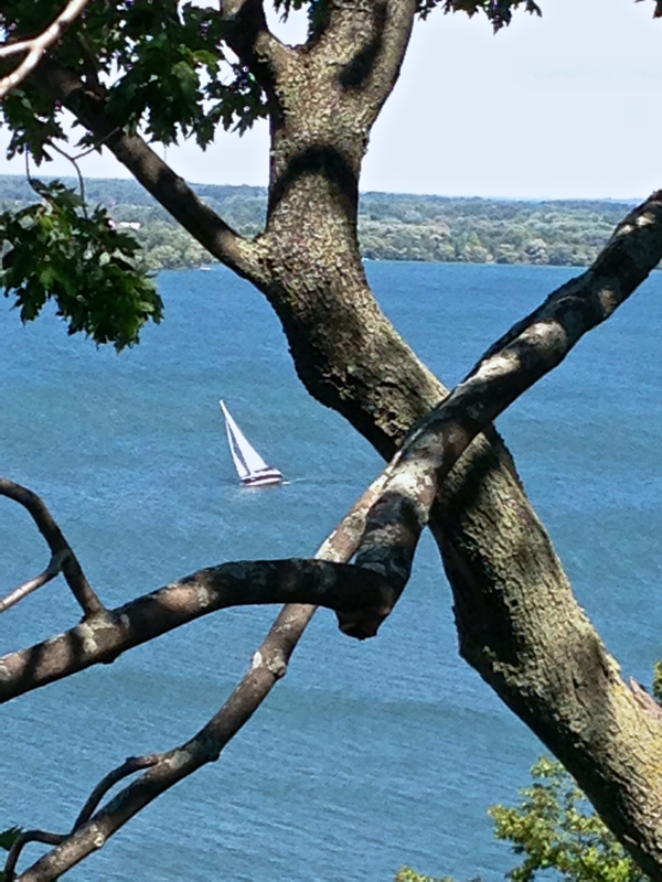 Sailboat through the trees… sigh