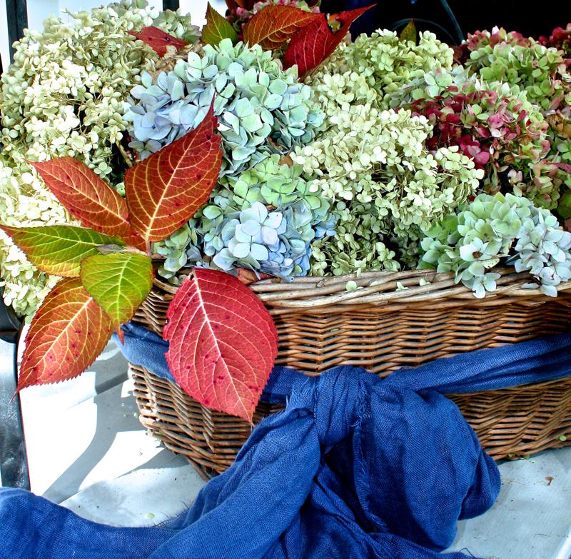 Hydrangea for Fall Styling cynthiaweber.com