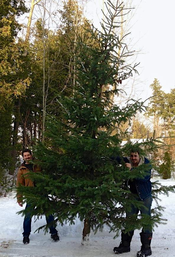 Big Tree!!! CynthiaWeber.com