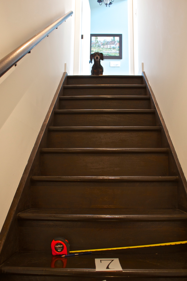 My assistant Emmitt helping stencil numbers on the staircase Cynthiaweber.com