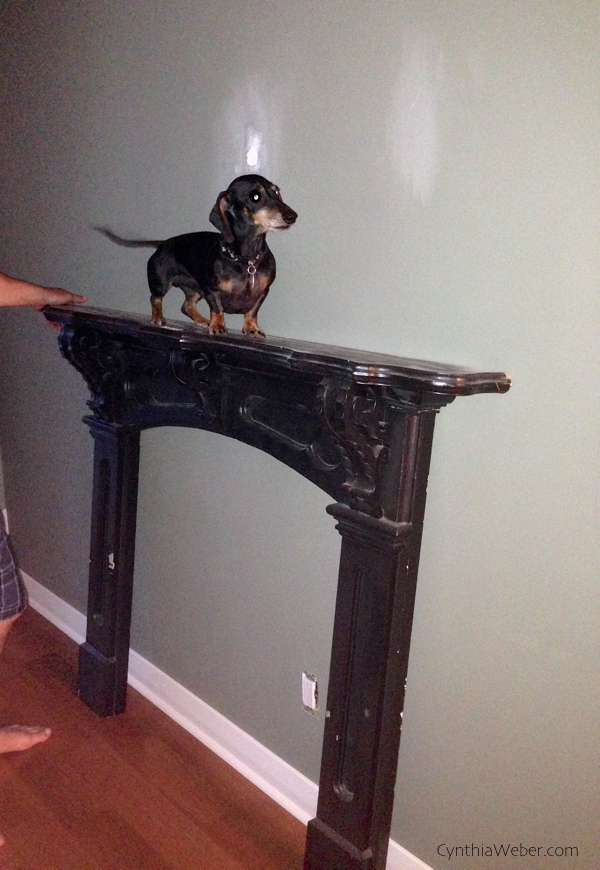 Emmitt is supervising the renovation… CynthiaWeber.com