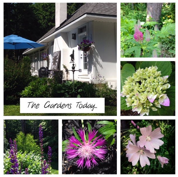 The gardens today at Hoop Top House… CynthiaWeber.com