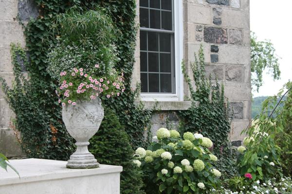 Flowers at Bannockburn… CynthiaWeber.com