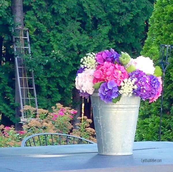 Hydrangea at Hoop Top House… CynthiaWeber.com