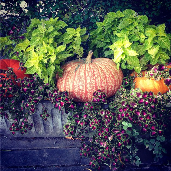 Fall Styling at the Little Inn of Bayfield… CynthiaWeber.com