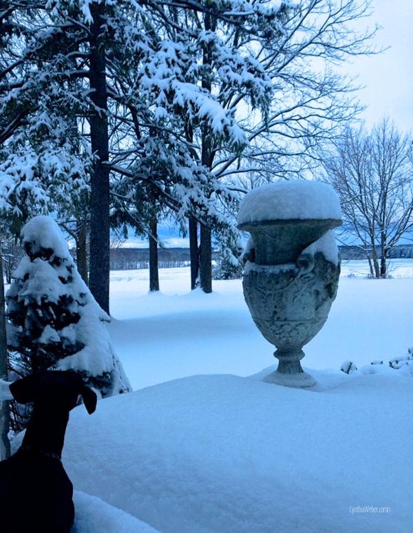 Emmitt investigating the snow… CynthiaWeber.com