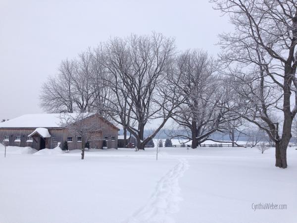 looking back at the barn… CynthiaWeber.com