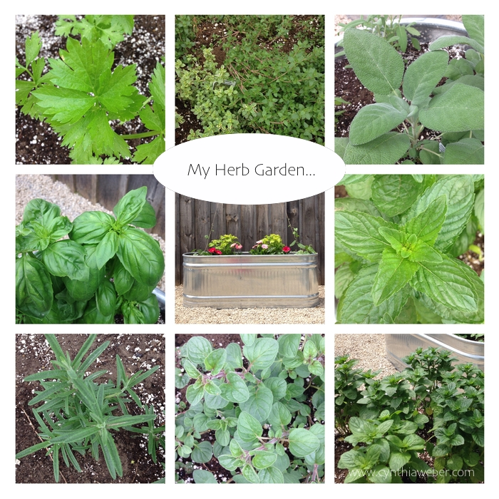 My Herb Garden using Water troughs… Cynthiaweber.com