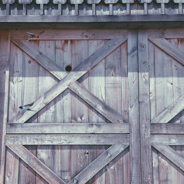 Hole in Barn door for birds