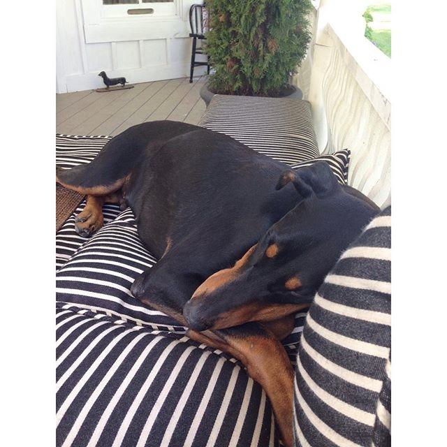 Having a nap… Cynthiaweber.com