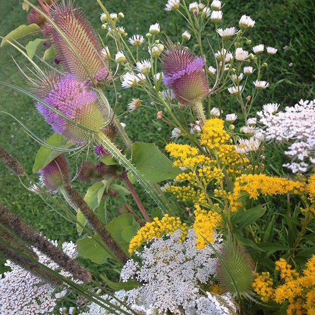 Wildflowers at BannockBurn 1878… Cynthiaweber.com