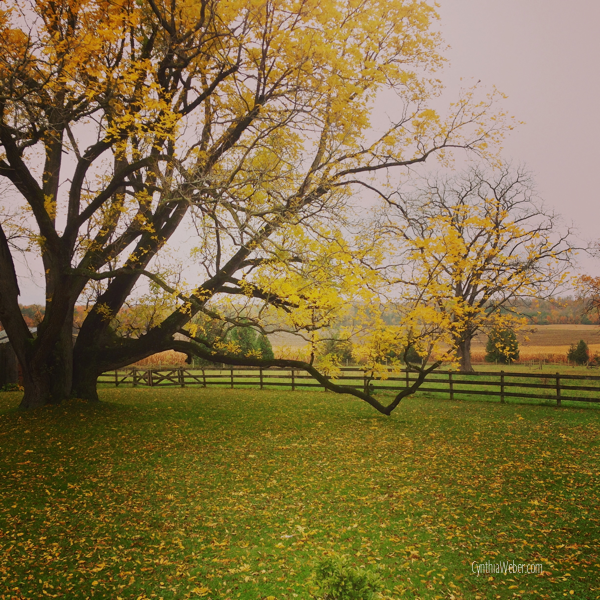 The-backyard-in-Fall…-CynthiaWeber.com_