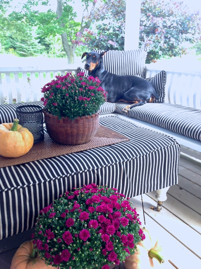 Ty enjoying the Fall styling… cynthiaweber.com