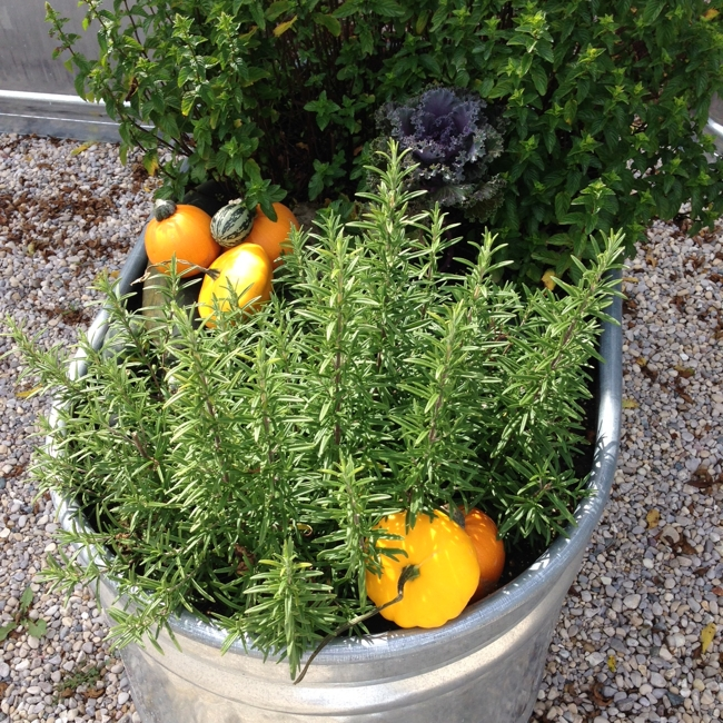 styling the herb garden for Fall… cynthiaweber.com