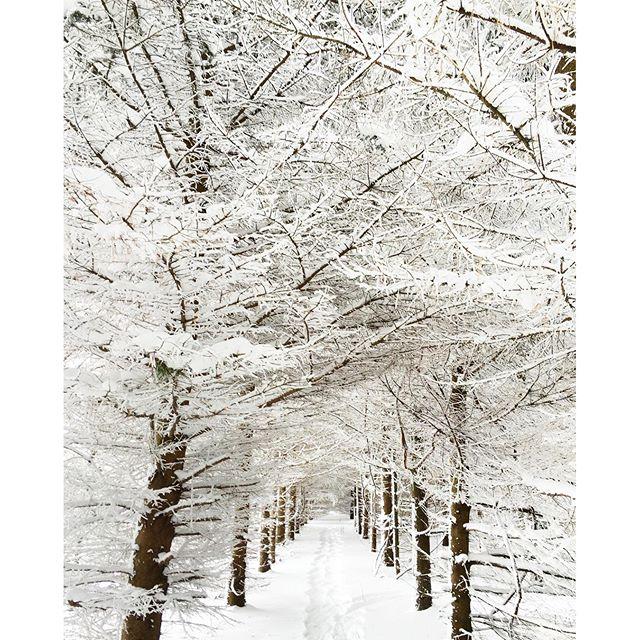 Winter Wonderland in the bush trail at BannockBurn 1878...