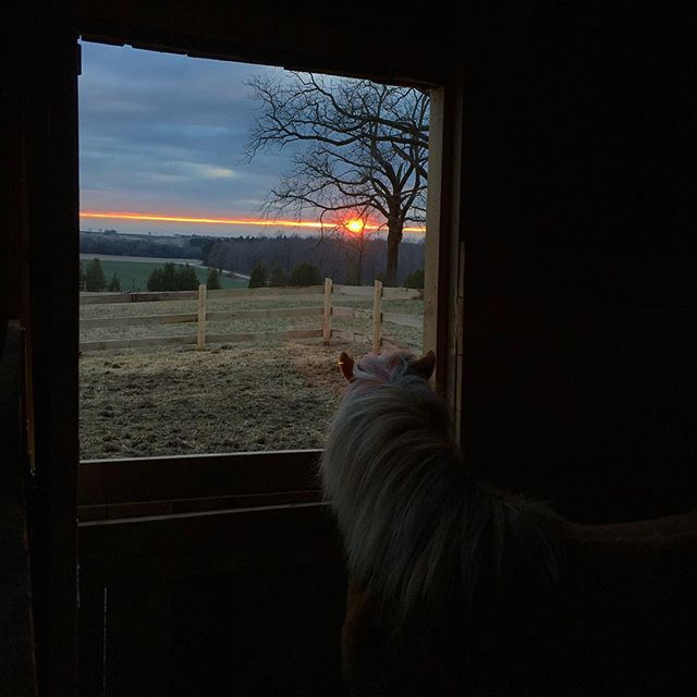 Willow watching sunset at BannockBurn 1878